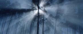 fogandtrees