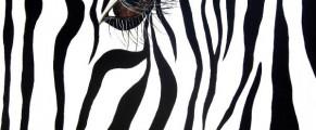 zebra#1