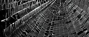 spiderweb#1
