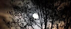 moon#4