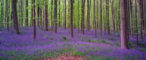 belgiumforest#4
