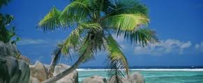 palmtree#1