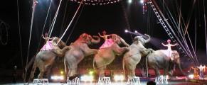 circus#5