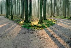 woods#10
