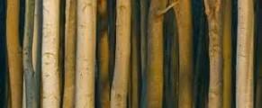woods#4