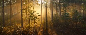 woods#20