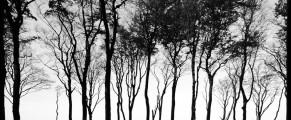 woods#1
