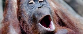 yawning#3