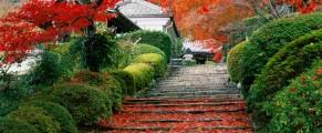 japanesegarden#3