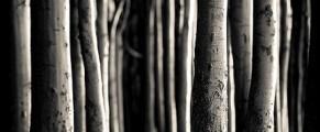 woods#7