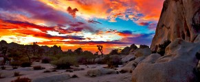 JoshuaTreeNationalPark#4