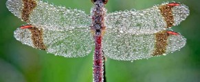 dragonfly#1