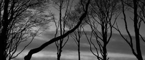 woods#8