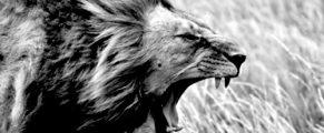 roaringlion#4