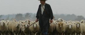 shepherd#1