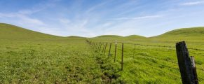 Panoramic view of a pasture at the Rush Ranch Open Space, Fairfield, California, USA, featuring the green, invasive grass that only lasts a few weeks in the winter through early spring
