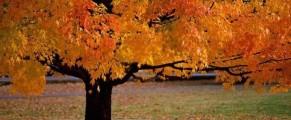 autumn#2