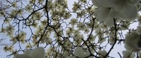 blossoms#9