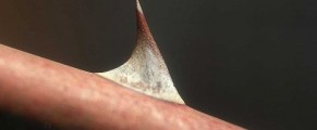thorn#1