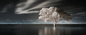 treeinwater