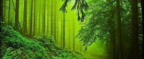 woods#19