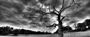 deadtree#3
