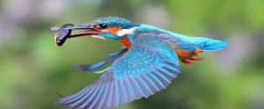 birdwithfish
