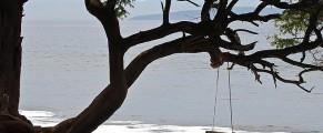 treeoverwater#4