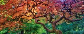 japanesegarden#11