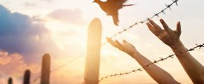 Woman hands frees the bird above a wire fence barbed
