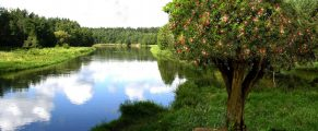 tree-word-river-22