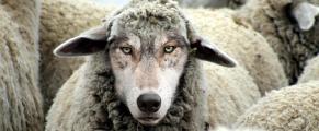 wolfatthedoor