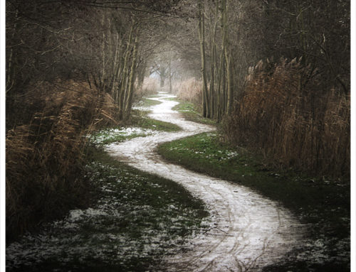 A Crooked Path has been suspended on Twitter