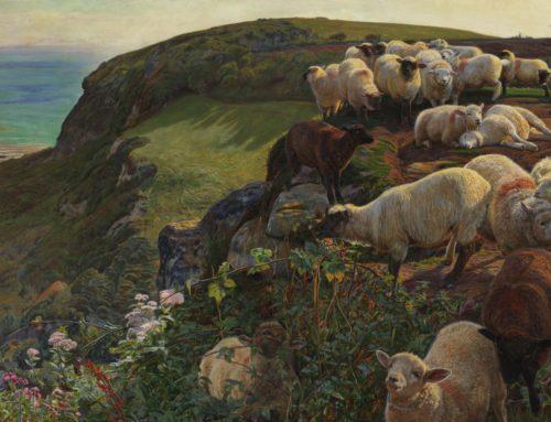 Wayward Sheep